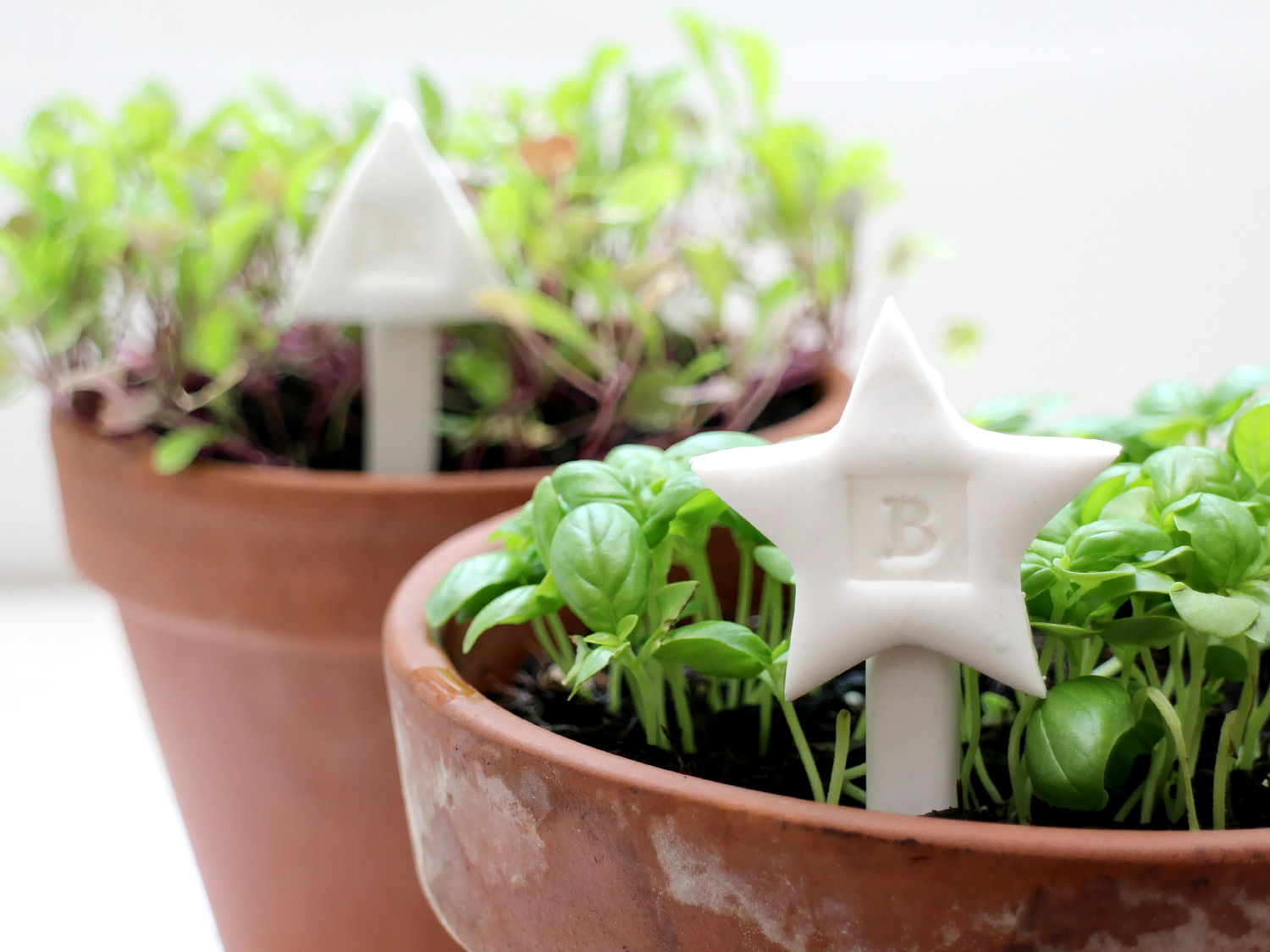 FIMO plant markers for basil